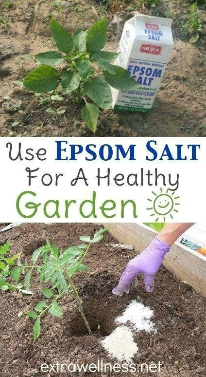 The Many Benefits Of Epsom Salt For Organic Gardening | Gardening With Epsom  Salt, According